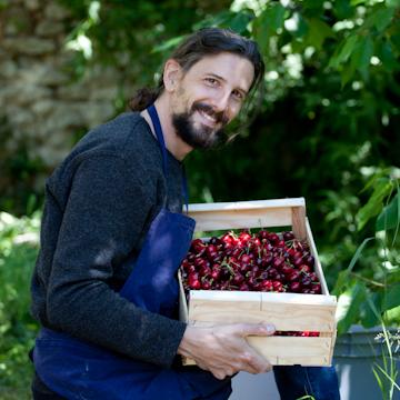 cueillette de notre production de cerises à Arles sur Tech pour un dessert végétal, bio et local