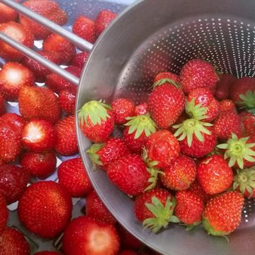 Fraises de l'agriculteur Pascal Barthel à Arles sur Tech  pour un dessert végétal, bio et local